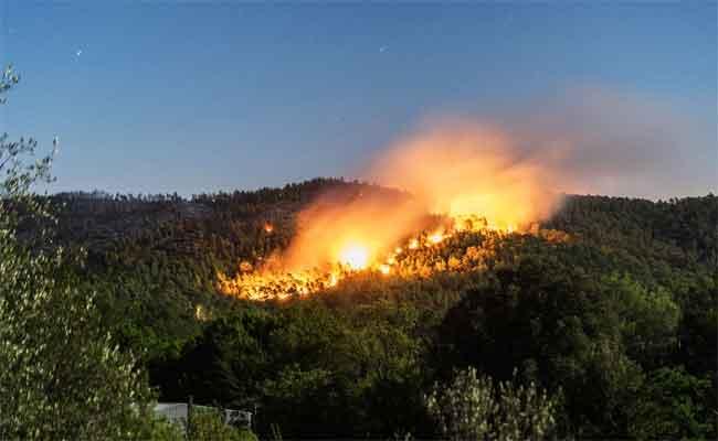 Feux de forêt d'Oued Goussine à Chlef : 5 personnes placées en détention préventive à Chlef