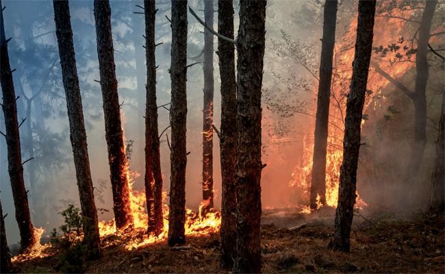 Un agent de la protection civile trouve la mort et plusieurs blessés dans les Feux de forêts à Blida
