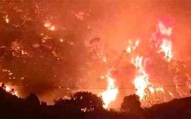 Incendies en Algérie : 16 membres du mouvement terroriste